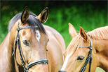 Everything you need to know about... Horse Care