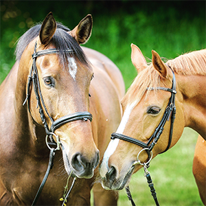 GetMyFirstJob | Everything you need to know about... Horse Care
