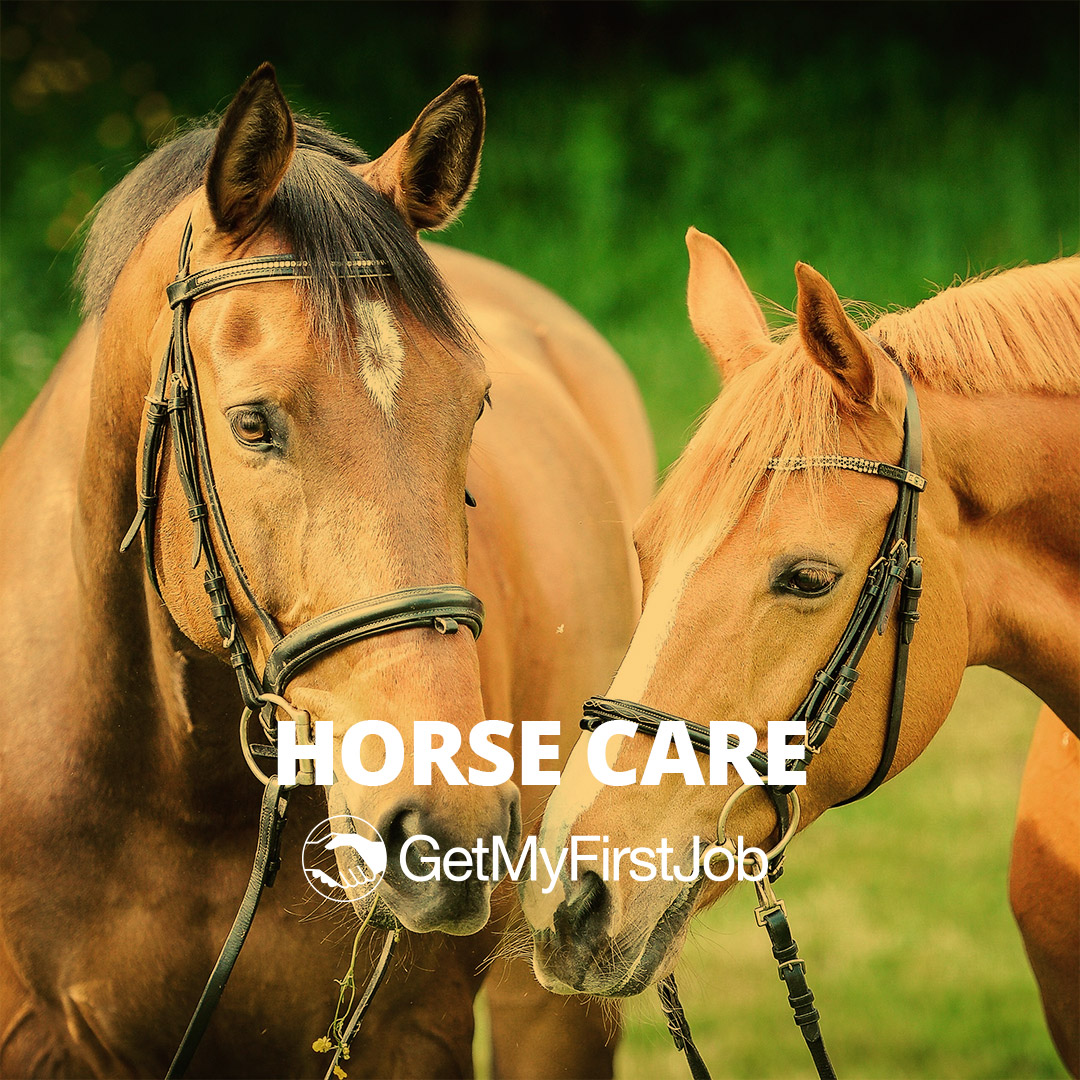 Horse Care Apprenticeships